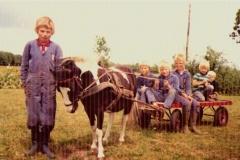 pony wagen
